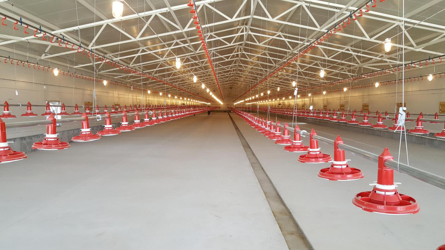 The building dimension  (115 x 15 meters)  makes it very suitable for tunnel ventilation. Each building is equipped with 5 Valènta feeding lines and 6 drinking nipple lines.